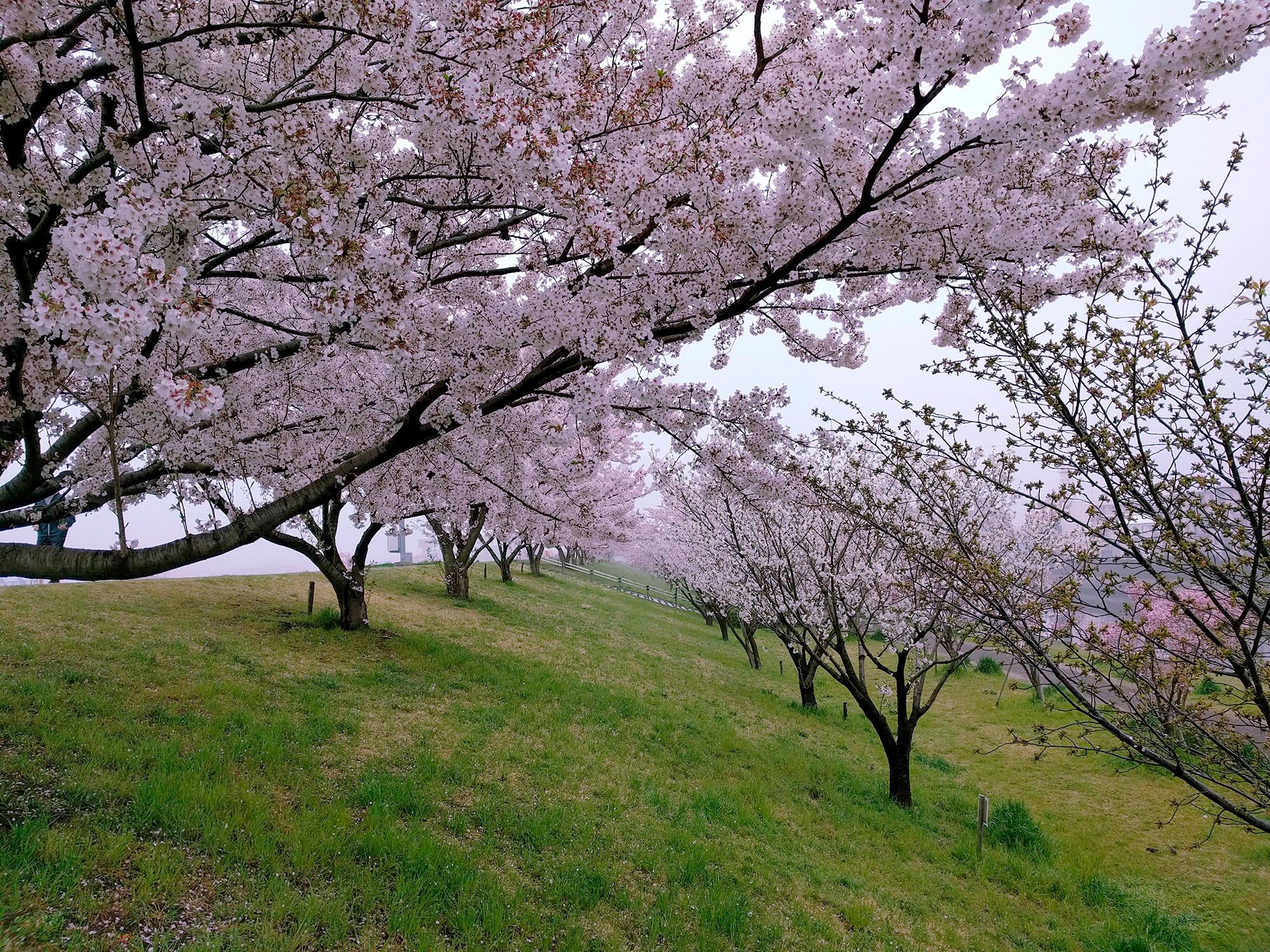 アンダンテと終曲 | klois.com